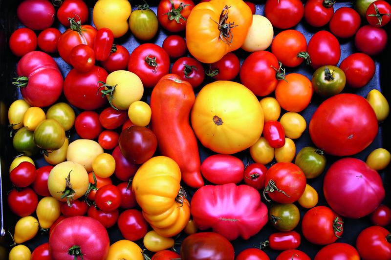 tomaten pflegen tomaten ausgeizen pflegen seitentriebe. Black Bedroom Furniture Sets. Home Design Ideas