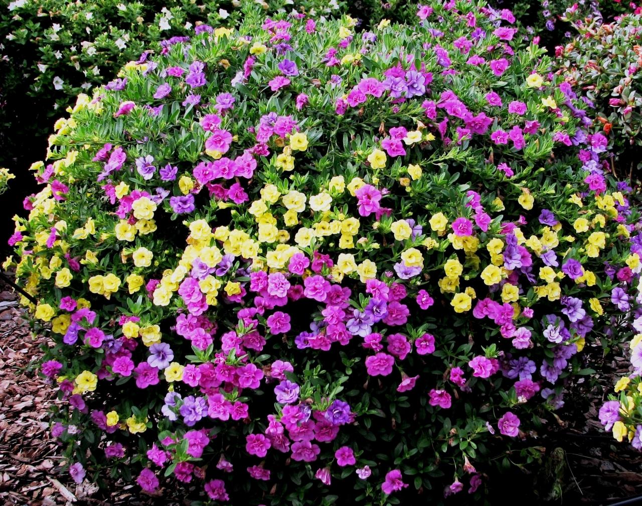 Beet Und Balkonpflanzen Kleingarten Magazin
