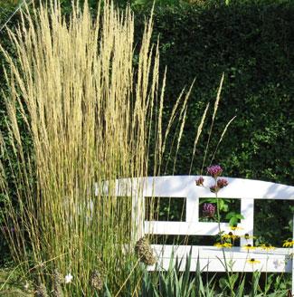 Gräser Im Garten gräser für den garten teil 1 kleingarten magazin