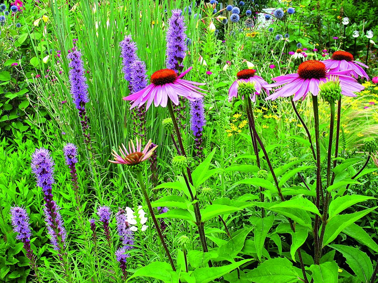 Stauden geschickt kombiniert kleingarten magazin - Pflanzen vorgarten ...