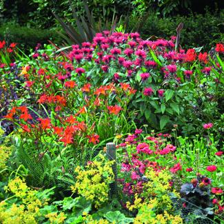 Pflanzenverwendung mit pflanzen gestalten kleingarten magazin - Kleingarten gestalten ...