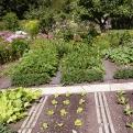 Abgeerntete Beete können jetzt mit Herbstsalaten bepflanzt werden. (Bild: Angelika Feiner)