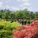 Solitärpflanzen sind eine Spezialität von Bruns.
