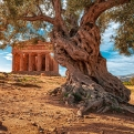 Olivenbaum mit Tempel