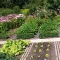 Im Juli und August werden die ersten Beete abgeerntet und ein weiteres Mal bepflanzt. (Foto: Angelika Feiner)