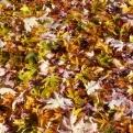 Spätherbst-Impressionen: Fallende Blätter (Bild: Angelika Feiner).